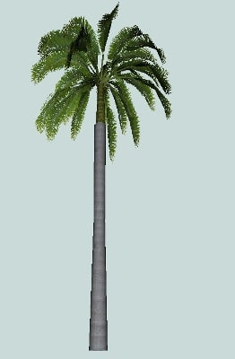 palm tree 3d obj
