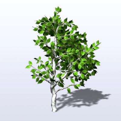 3d model of birch tree