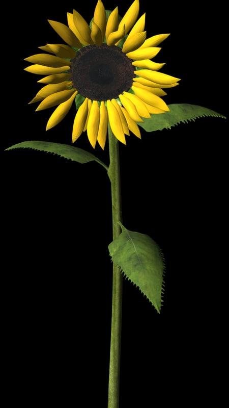 flower sunflower 3d model
