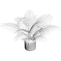 3d model palm plant