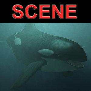 3d orca whale