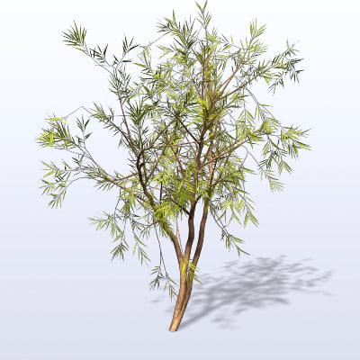 willow tree ma