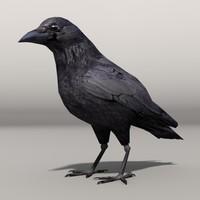 crow max
