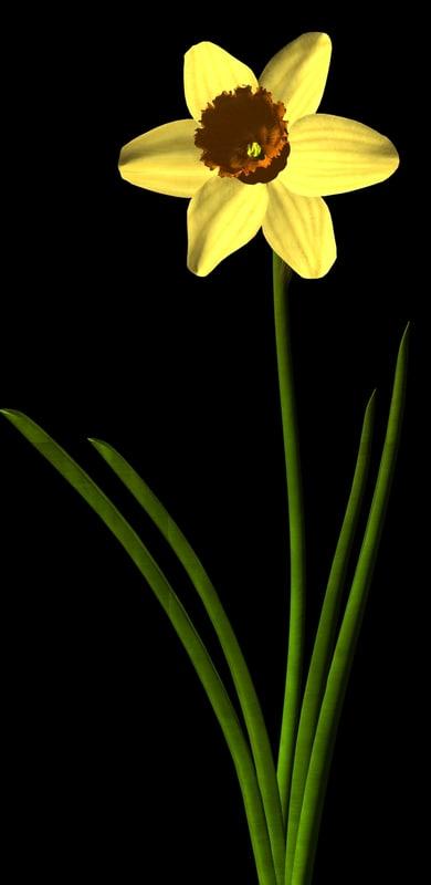3d daffodil flower model