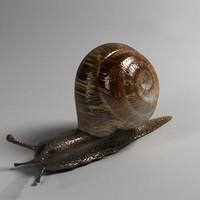 snail slug 3d model