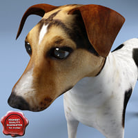 3d jack russel terrier click