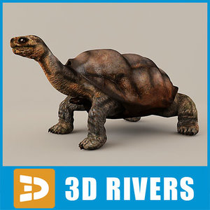 lonesome george tortoise 3d 3ds
