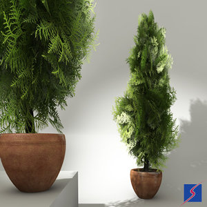 potted thuja 3d model