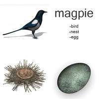 3d model magpie set