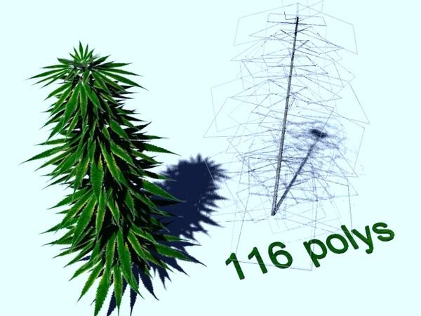 free marijuana bush 3d model