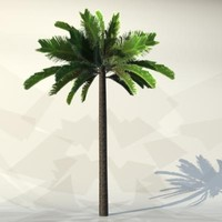 3ds max pc palm
