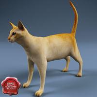 cat modelled 3d model