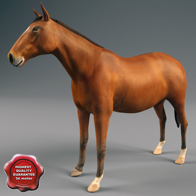 horse modelled check 3d max