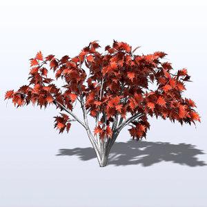 maya sumac tree leaf
