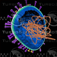 cutaway h1n1 flu virus 3d model