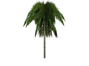 free ma model palm tree