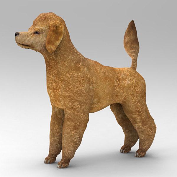 3dsmax poodle dog