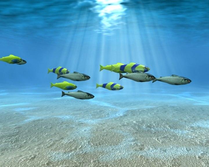 3d fish shoal
