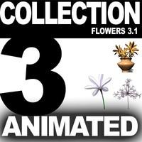 realistic medium orchid 3d model