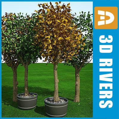 3d cedar elm trees