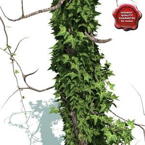 old tree ivy v2 3d model