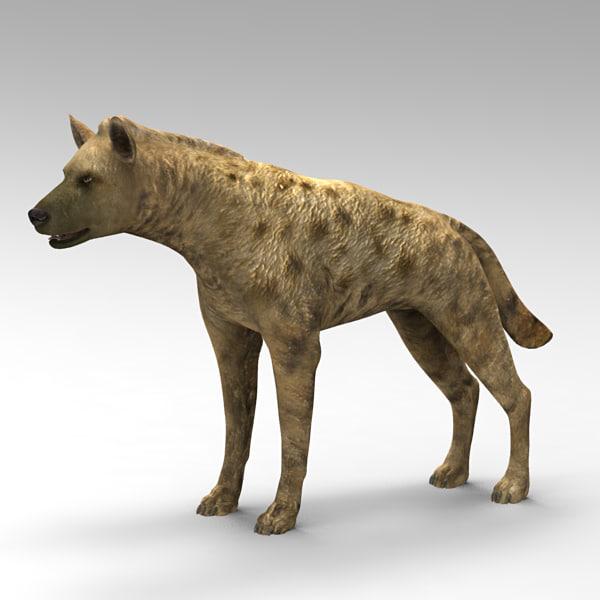 hyena hair 3d model