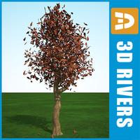 3dsmax fall oak tree