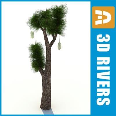 3d model yucca-filifera island warm