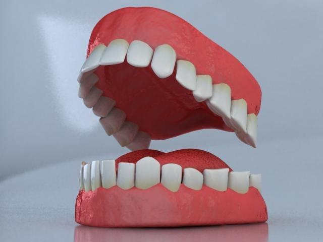 3d model set teeth