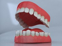 Teeth Set  3D Model - Medium Detail