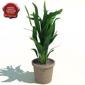 areca palm butterfly 3d max