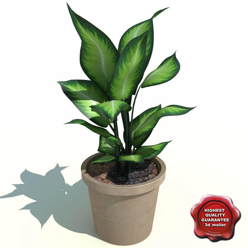 dieffenbachia picta camila 3d max