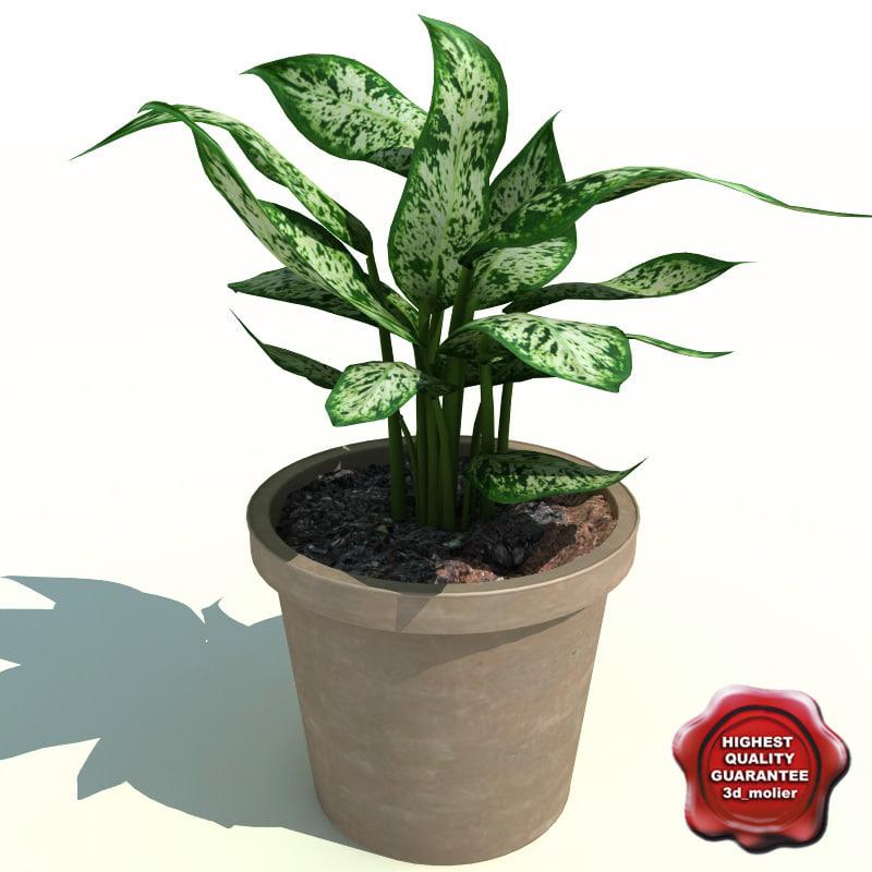 dieffenbachia picta exotica 3d model