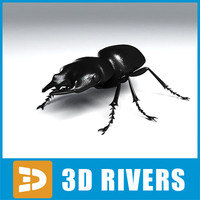3d ground beetle insect
