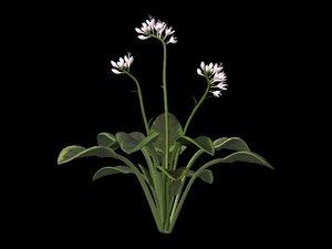 plant hosta 3d ma