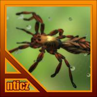Red Spider