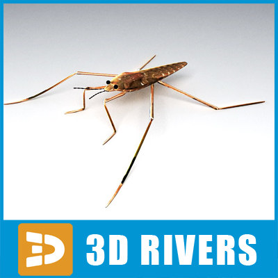 water stride insect 3ds