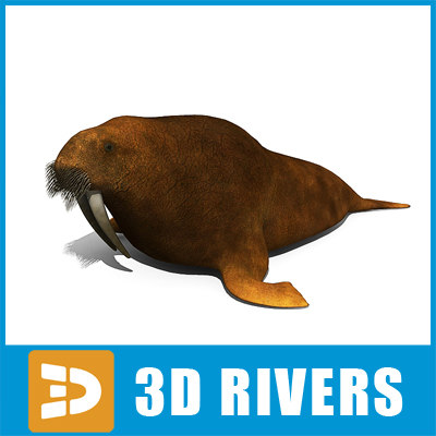 3d walrus large flippered