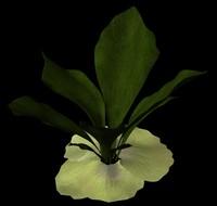 plant staghorn fern 3d ma