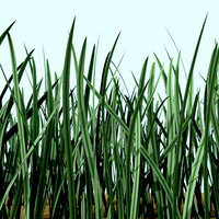 3d model tuft grass lawn