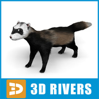 Ferret by 3DRivers