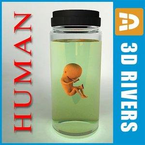 3dsmax weeks human embryo