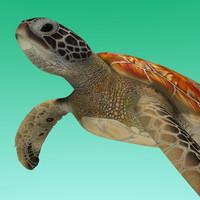 green sea turtle 3d obj