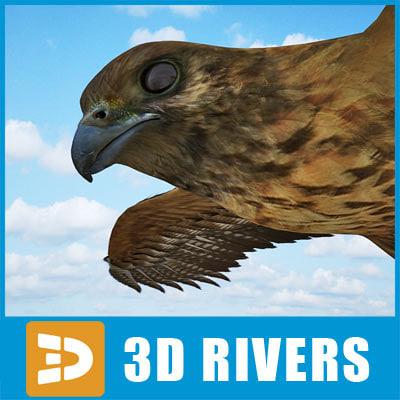 buzzard birds 3d model