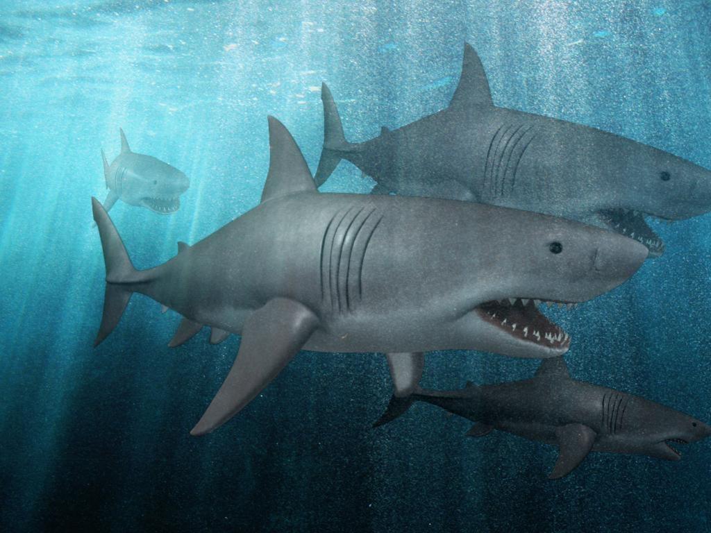 resolution shark 3d model