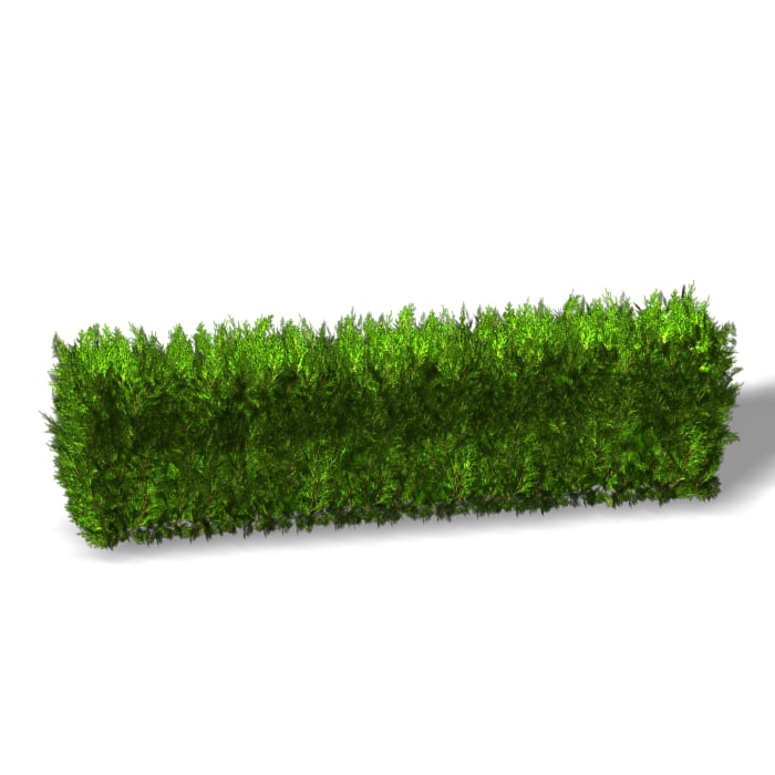 bush hedge max