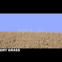 dry grass max