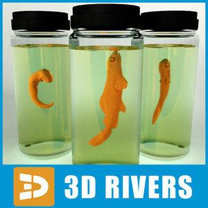 3ds max fish embryo