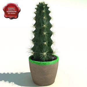 3d cactus cereus peruvianus model