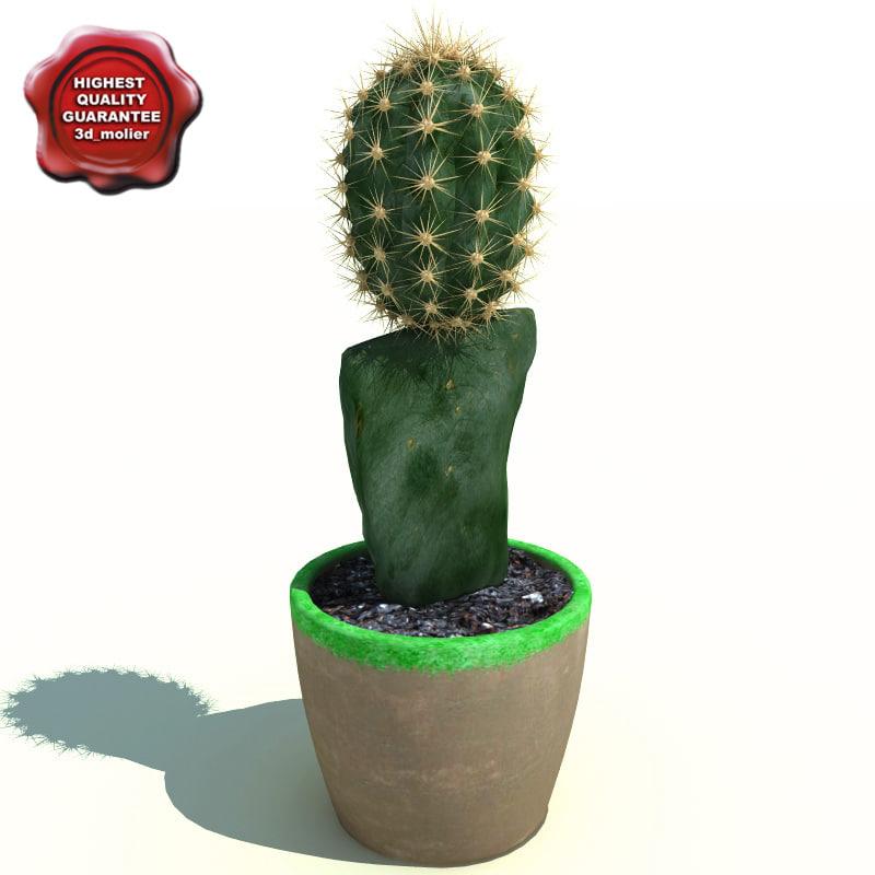 cactus gymnocalycium mihanovichii friedrichii 3d max